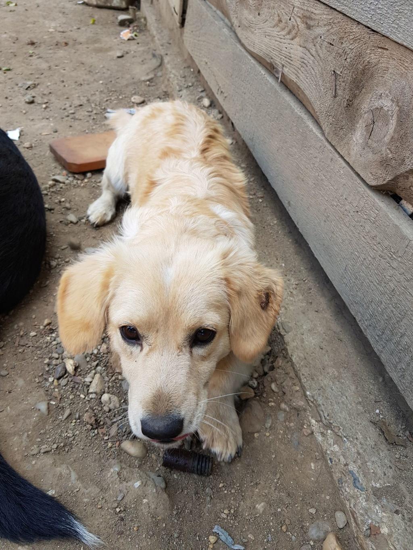 Blondie- femelle- en famille d'accueil à Arad - adoptée via Arad Blondi19