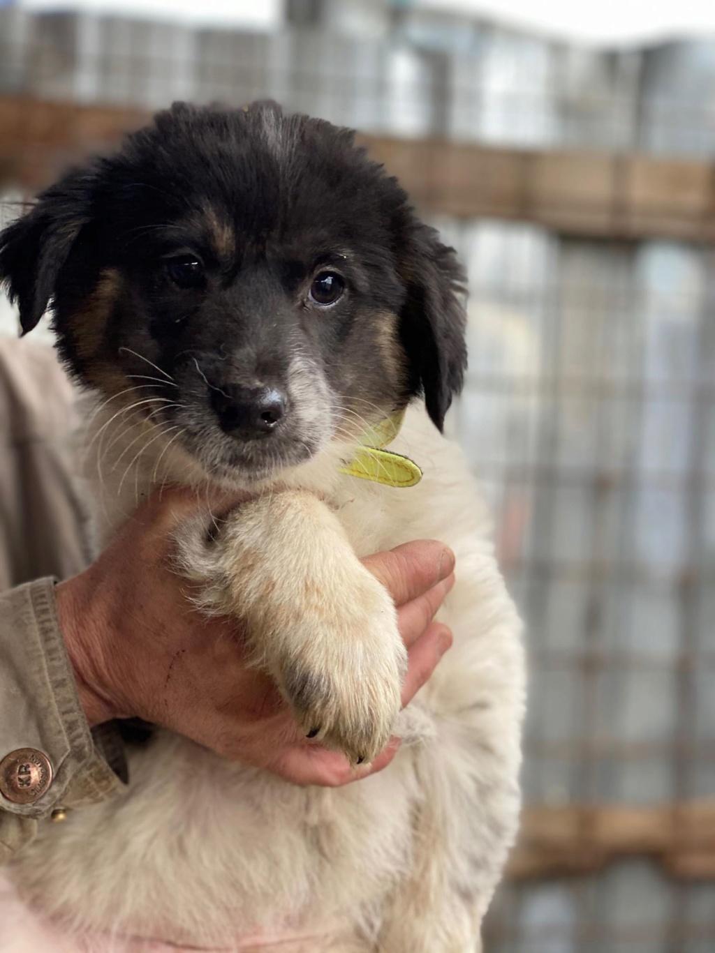 Bounty- femelle- fourrière de Târgu Frumos Réservée adoption (67) - DCD Bounty10