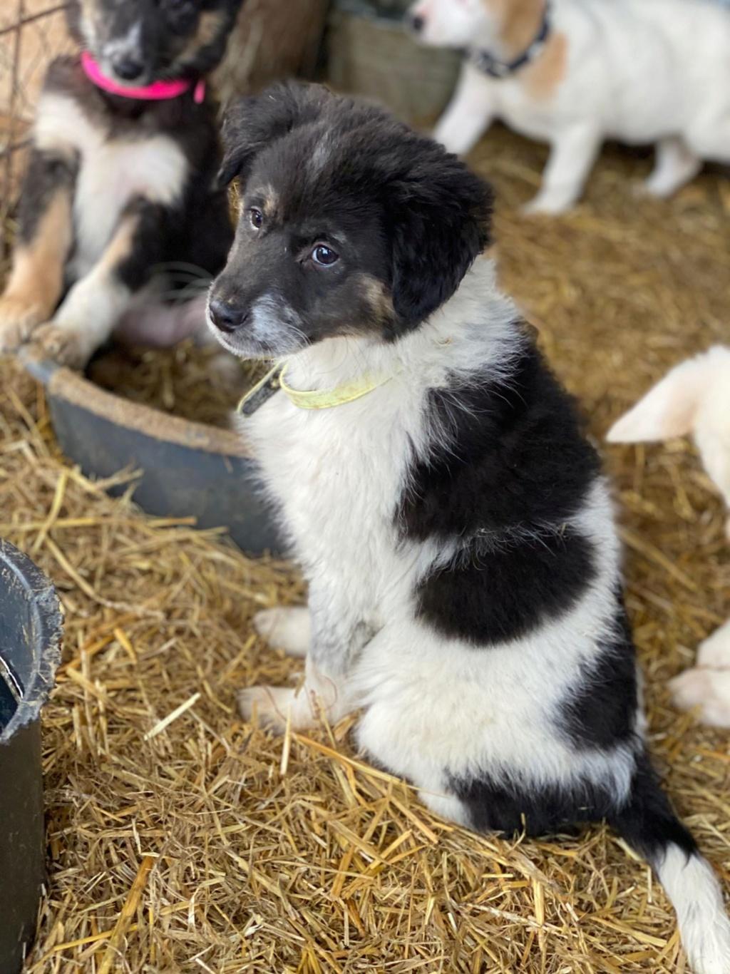 Bounty- femelle- fourrière de Târgu Frumos Réservée adoption (67) - DCD Bounty14