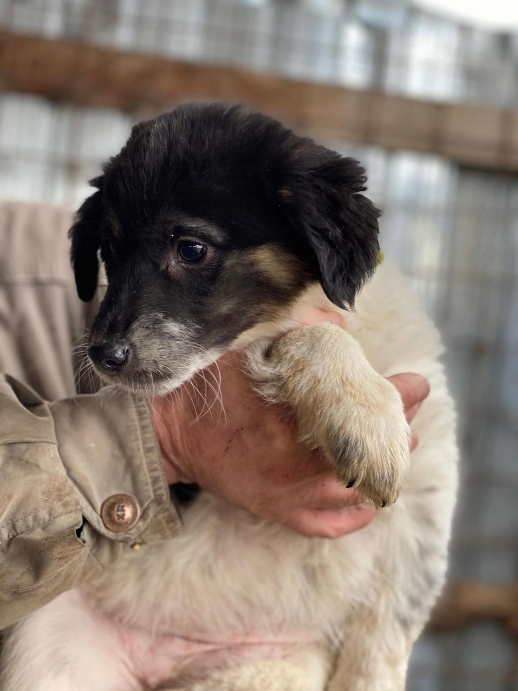 Bounty- femelle- fourrière de Târgu Frumos Réservée adoption (67) - DCD Bounty16