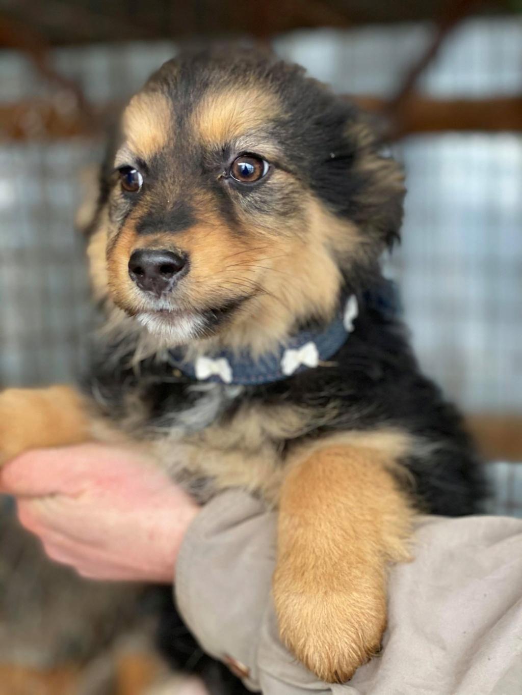 Nouka (ex Bretzel) - femelle- fourrière de Târgu Frumos - Réservée adoption (25)  Bretze19