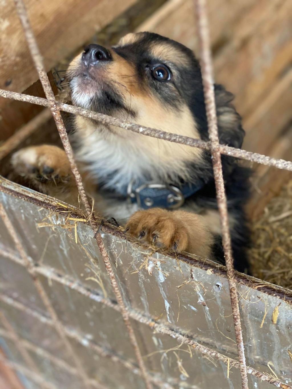 Nouka (ex Bretzel) - femelle- fourrière de Târgu Frumos - Réservée adoption (25)  Bretze20