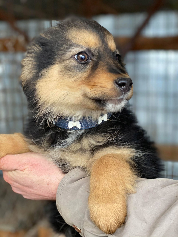 Nouka (ex Bretzel) - femelle- fourrière de Târgu Frumos - Réservée adoption (25)  Bretze21