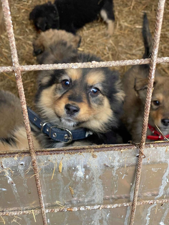 Nouka (ex Bretzel) - femelle- fourrière de Târgu Frumos - Réservée adoption (25)  Bretze22
