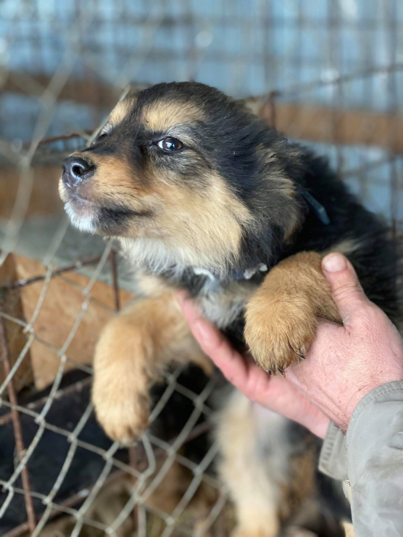 Nouka (ex Bretzel) - femelle- fourrière de Târgu Frumos - Réservée adoption (25)  Bretze23