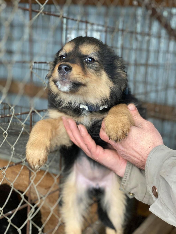 Nouka (ex Bretzel) - femelle- fourrière de Târgu Frumos - Réservée adoption (25)  Bretze24
