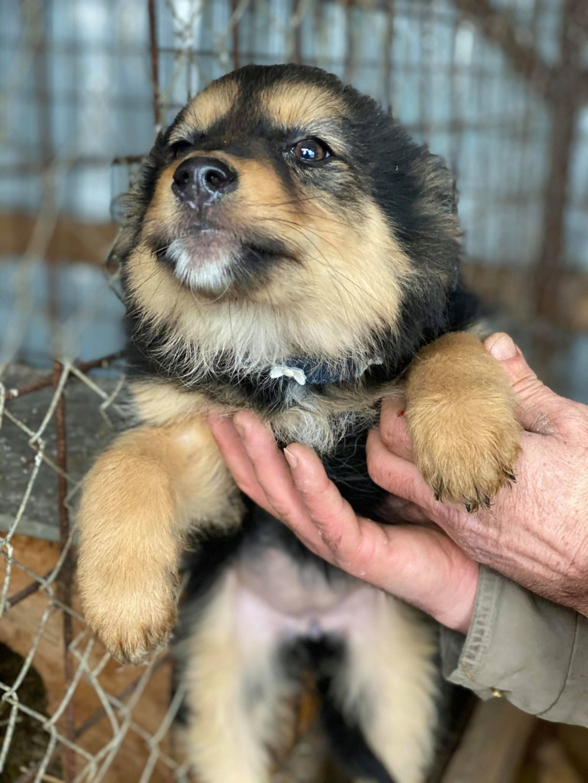 Nouka (ex Bretzel) - femelle- fourrière de Târgu Frumos - Réservée adoption (25)  Bretze25