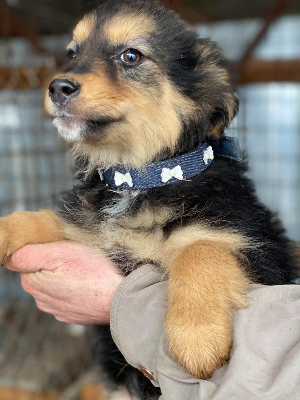 Nouka (ex Bretzel) - femelle- fourrière de Târgu Frumos - Réservée adoption (25)  Bretze26