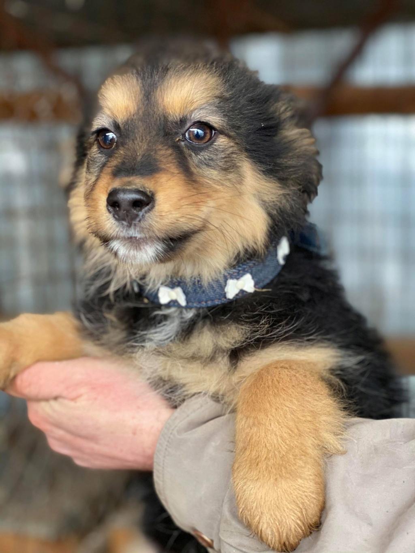 Nouka (ex Bretzel) - femelle- fourrière de Târgu Frumos - Réservée adoption (25)  Bretze27