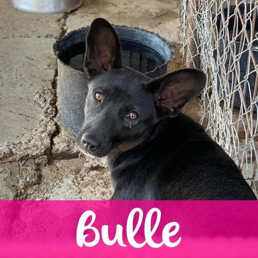 BulleF