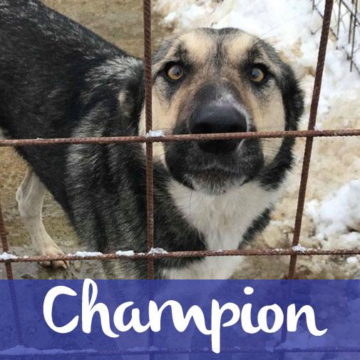 ChampionM