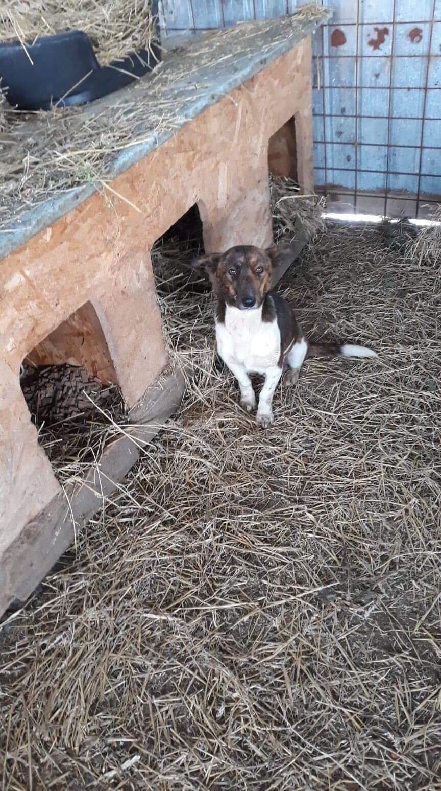 Chance - femelle -  Fourrière de Târgu Frumos - adoptée en Hollande Chance10