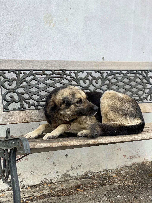 Charlie- femelle- dans les rues de Târgu Frumos Charli18