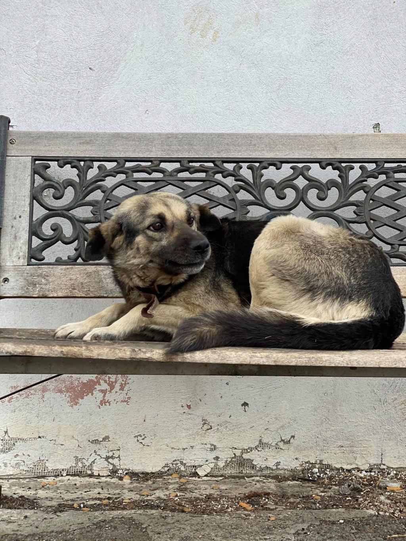 Charlie- femelle- dans les rues de Târgu Frumos Charli21