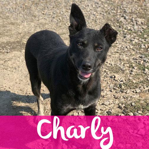 CharlyF