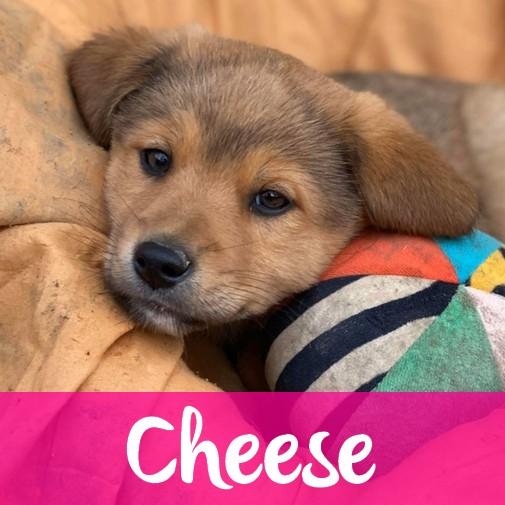 CheeseF