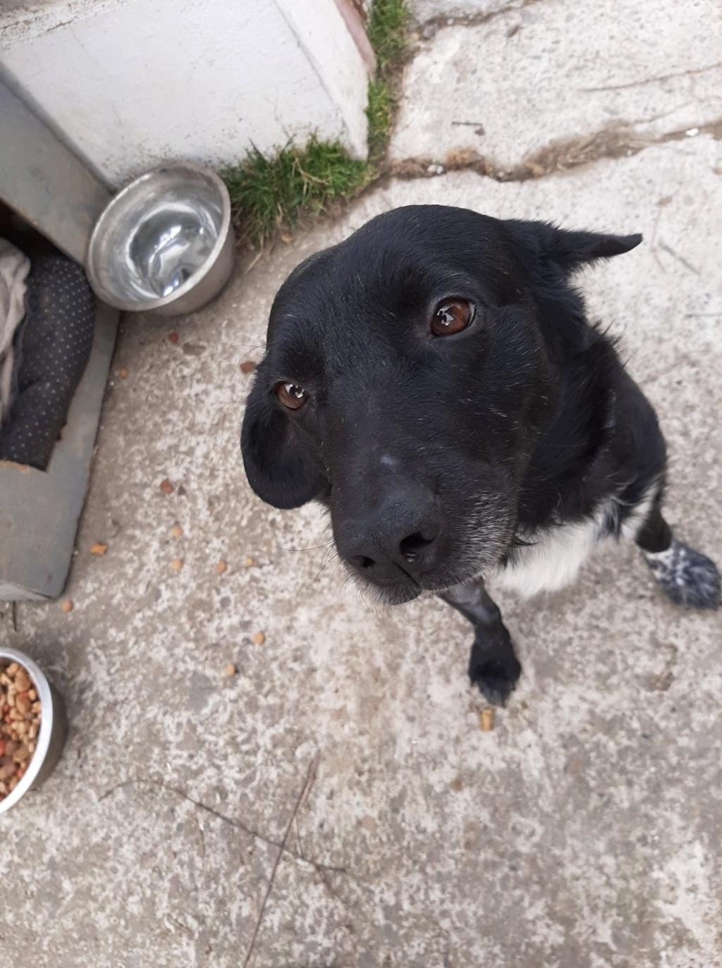 Cherokee- mâle- fourrière de Târgu Frumos - adopté via Andreea Cherok10