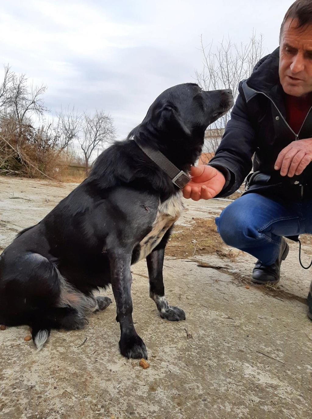 Cherokee- mâle- fourrière de Târgu Frumos - adopté via Andreea Cherok15