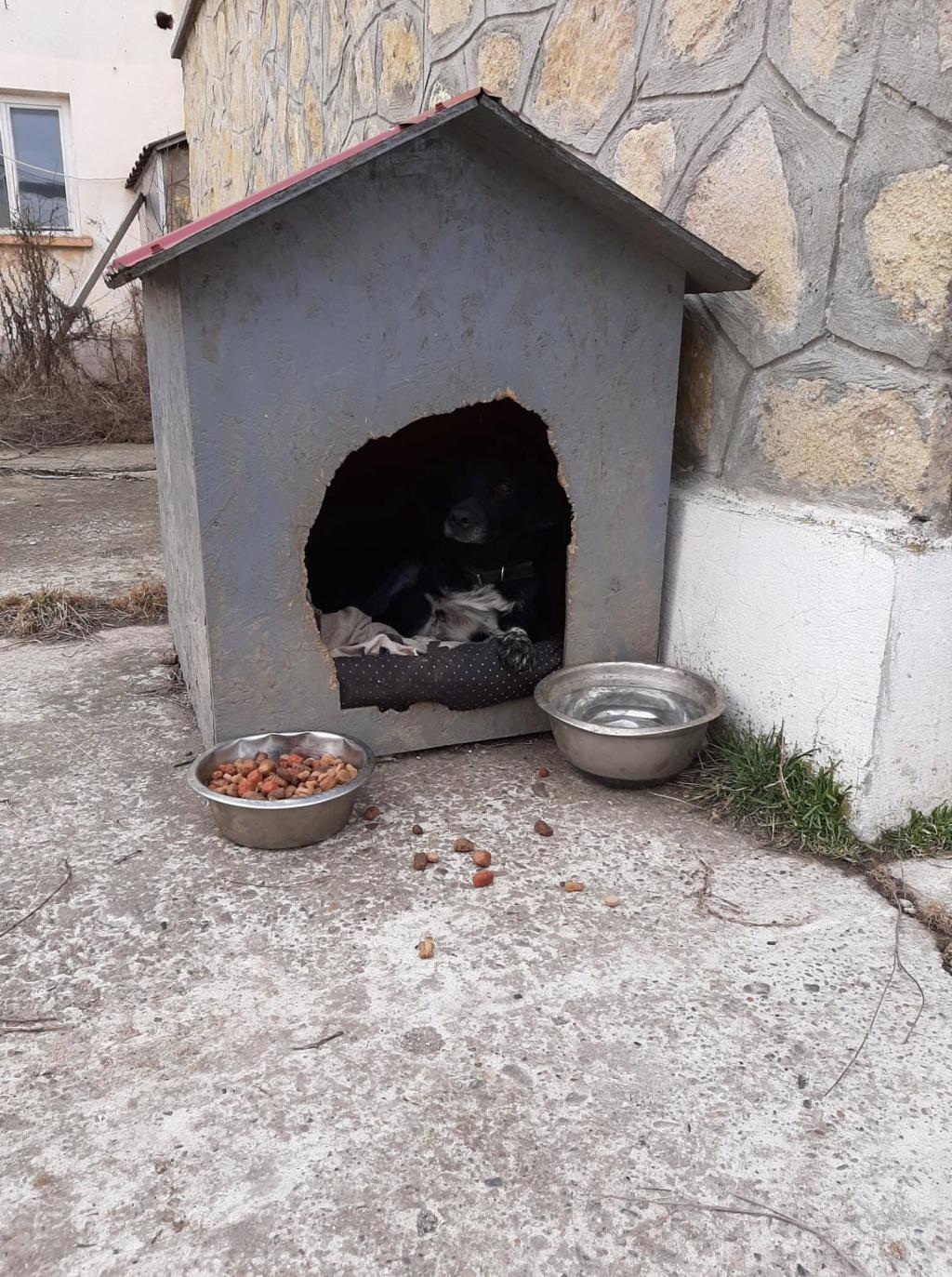 Cherokee- mâle- fourrière de Târgu Frumos - adopté via Andreea Cherok22