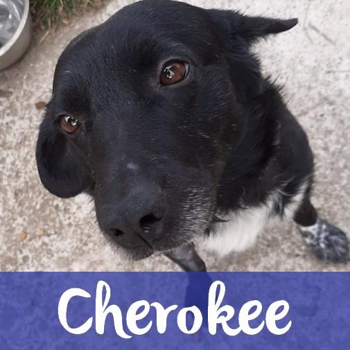 CherokeeM