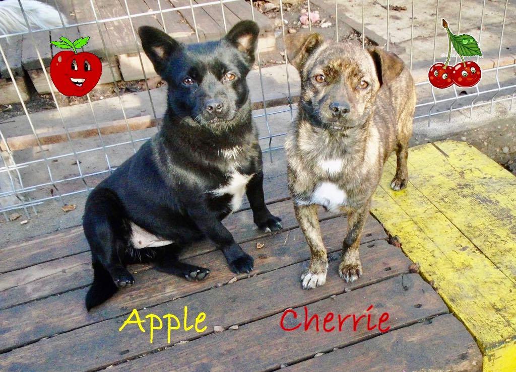 Apple- femelle- refuge d'Arad - réservée adoption (67) Cherri12