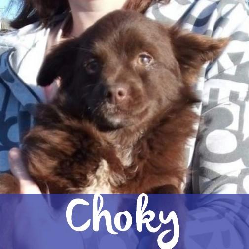 ChokyM