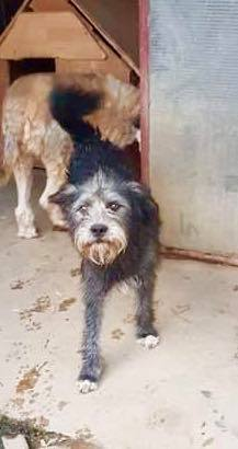 Chumlee-mâle- refuge d'Arad - adopté via Arad Chumle11