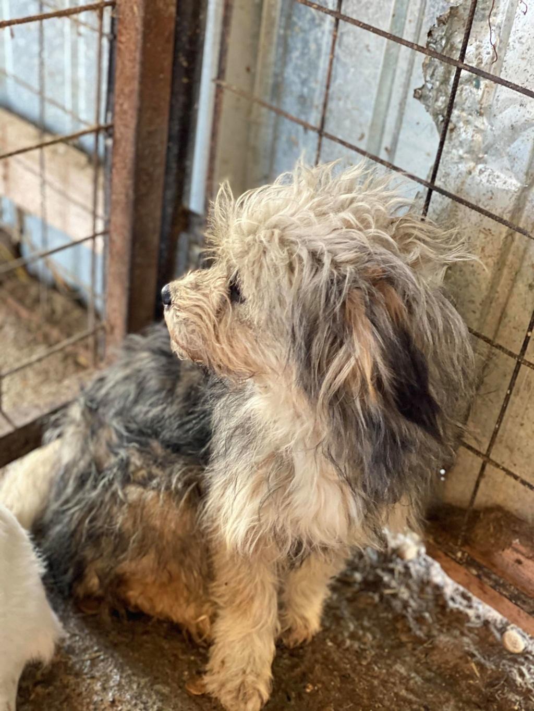 Circé-femelle- fourrière de Târgu Frumos - reservee adoption (68) Circe_11