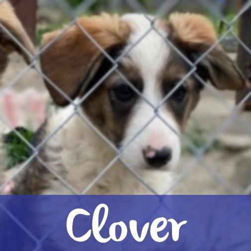 CloverM