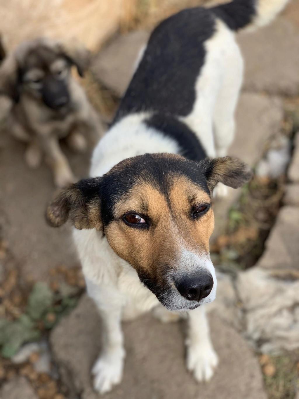 Colombine- femelle- fourrière de Târgu Frumos - adoptée via Andreea Colomb16