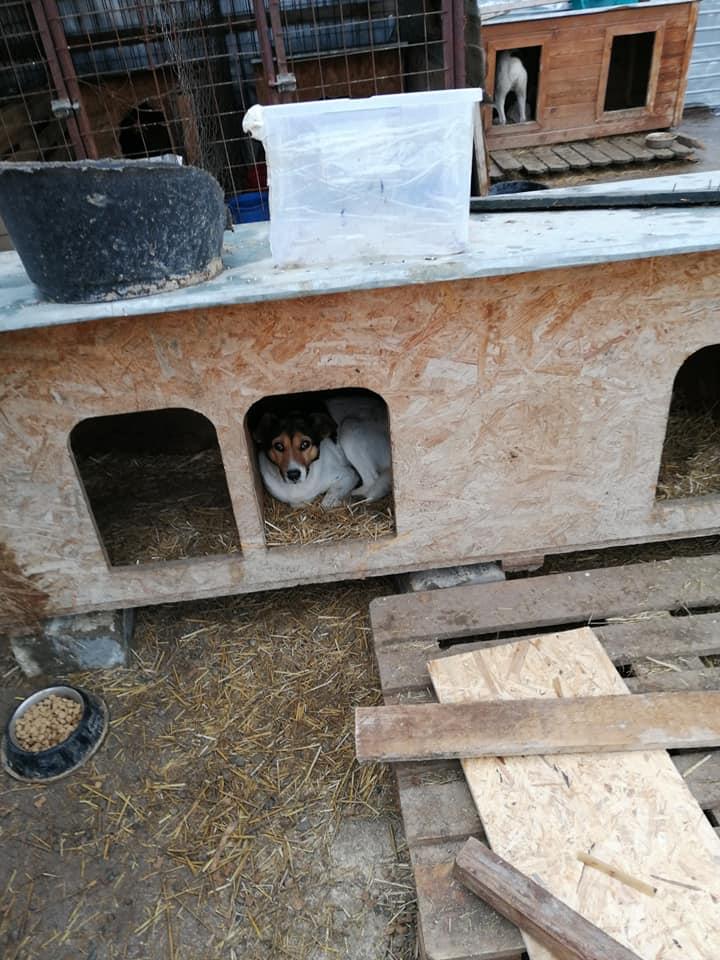 Colombine- femelle- fourrière de Târgu Frumos - adoptée via Andreea Colomb17
