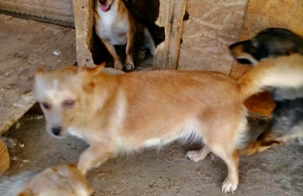 Columbine - femelle - refuge d'Arad - frais d'adoption réduits Columb10