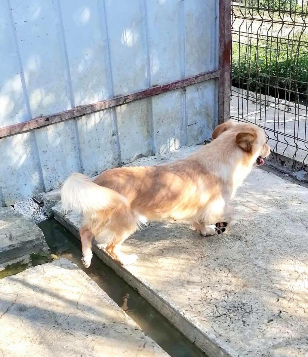 Columbine - femelle - refuge d'Arad - frais d'adoption réduits Columb15