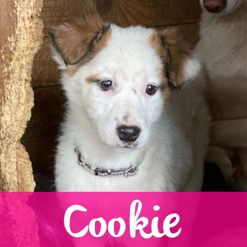 CookieF