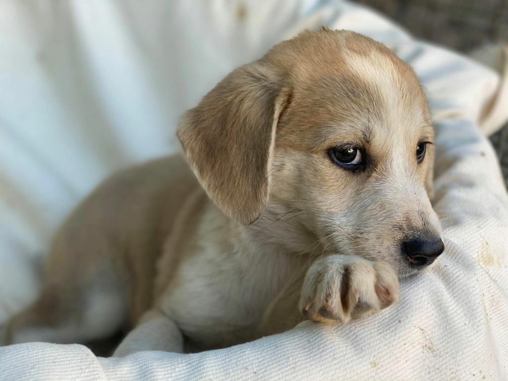 Ruby (ex-Cracotte) - femelle - fourrière de Târgu Frumos - Réservée adoption (68) Cracot10