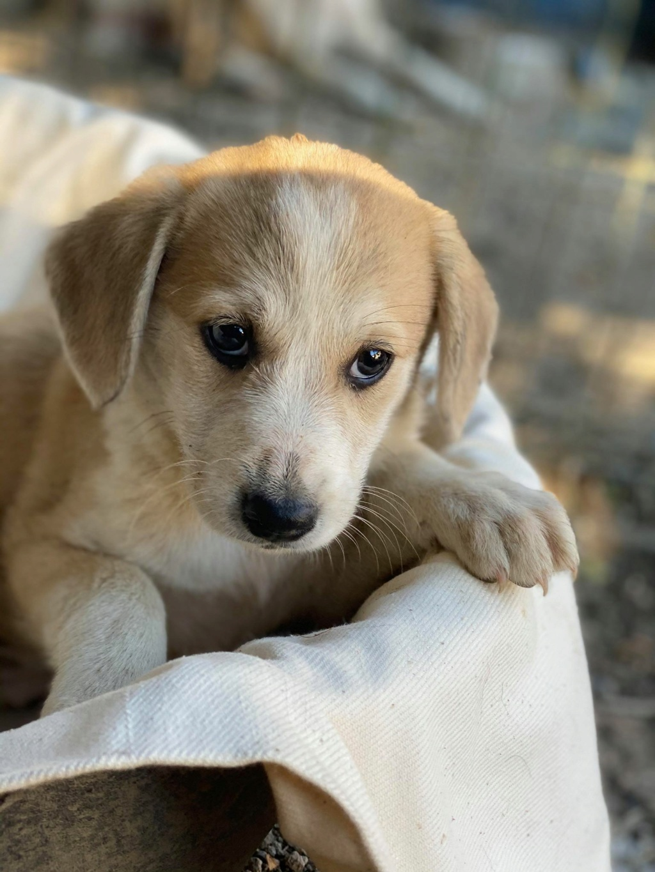 Ruby (ex-Cracotte) - femelle - fourrière de Târgu Frumos - Réservée adoption (68) Cracot11