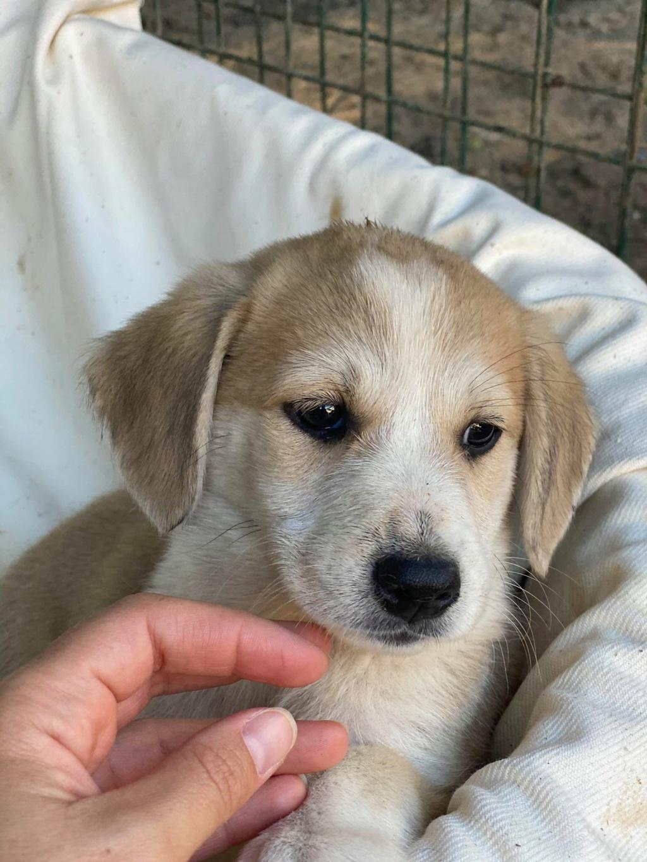 Ruby (ex-Cracotte) - femelle - fourrière de Târgu Frumos - Réservée adoption (68) Cracot13