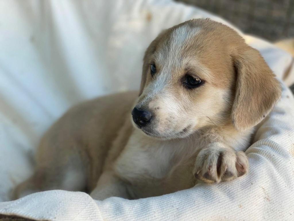 Ruby (ex-Cracotte) - femelle - fourrière de Târgu Frumos - Réservée adoption (68) Cracot14