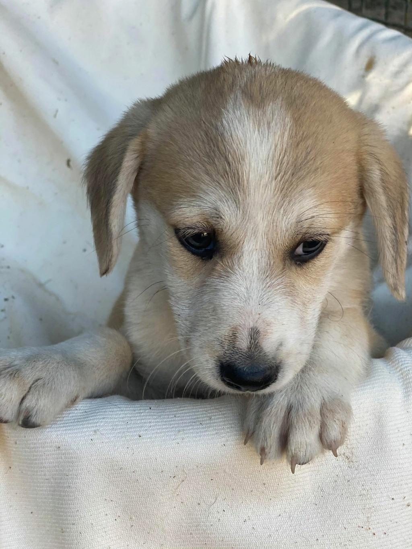 Ruby (ex-Cracotte) - femelle - fourrière de Târgu Frumos - Réservée adoption (68) Cracot17