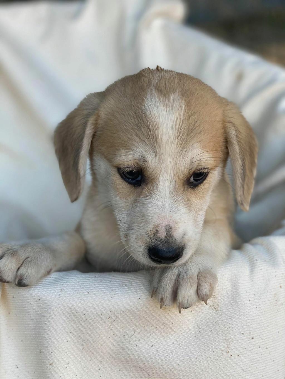 Ruby (ex-Cracotte) - femelle - fourrière de Târgu Frumos - Réservée adoption (68) Cracot19