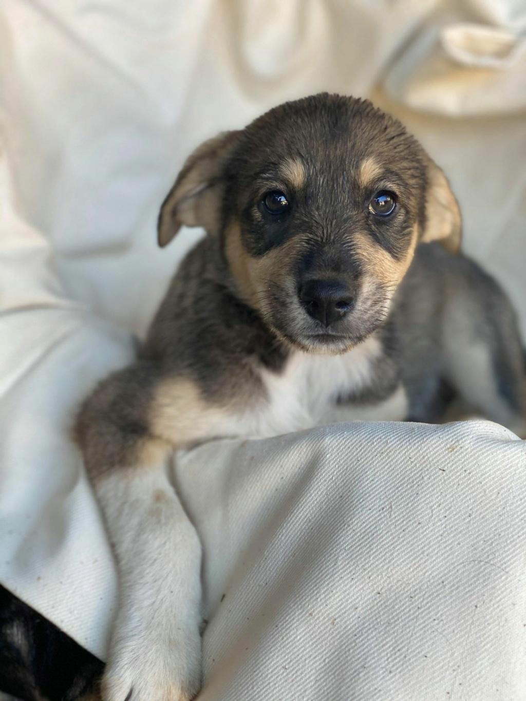 Cratch - mâle - fourrière de Târgu Frumos - adopté via Andreea Cratch10
