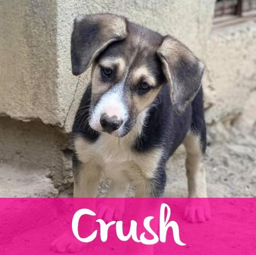 CrushF