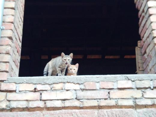 Mao (ex-Pixel) - Mâle chaton - en FA dans le 67 Ddfa9e10