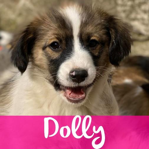 DollyF