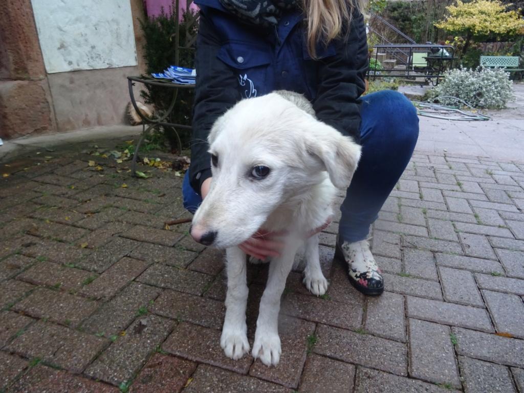 Alaska - femelle - Târgu Frumos - réservé adoption (68) Dsc00210