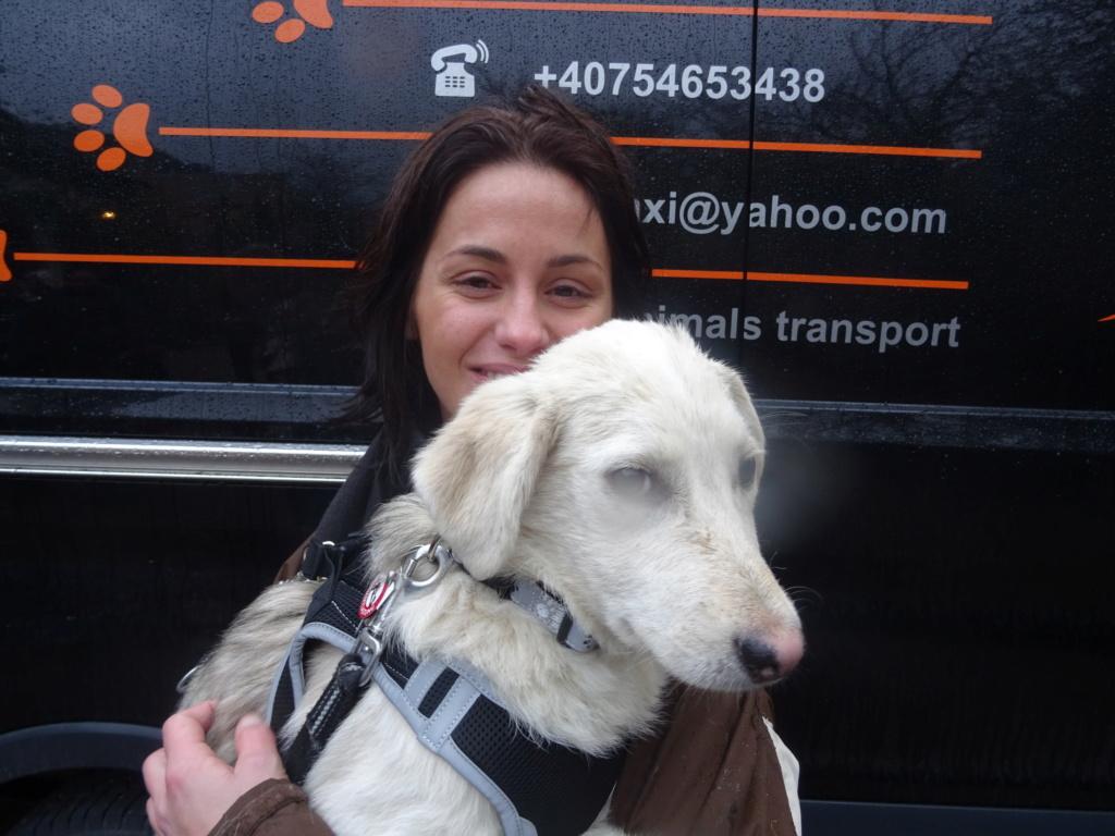 Alaska - femelle - Târgu Frumos - réservé adoption (68) Dsc00211