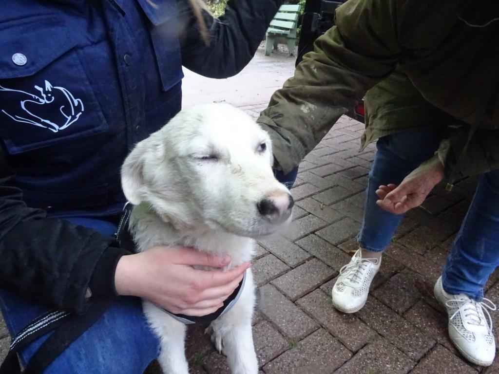 Alaska - femelle - Târgu Frumos - réservé adoption (68) Dsc00212