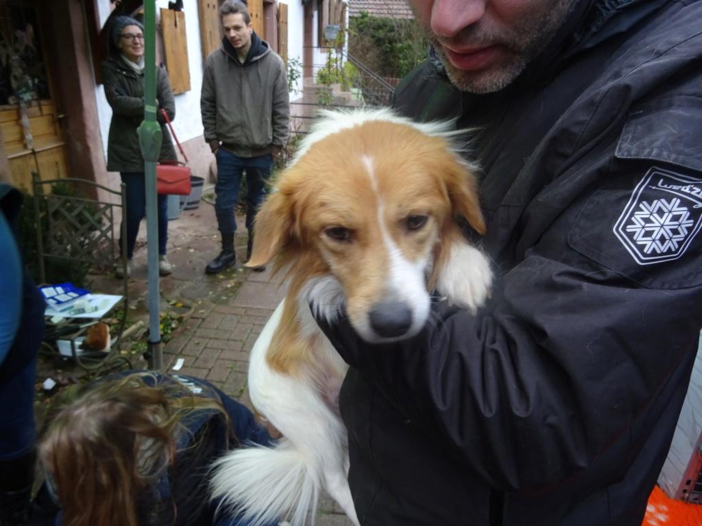 Kenzo (ex-Leon) - mâle - refuge d'Arad - réservé adoption (67) Dsc00232