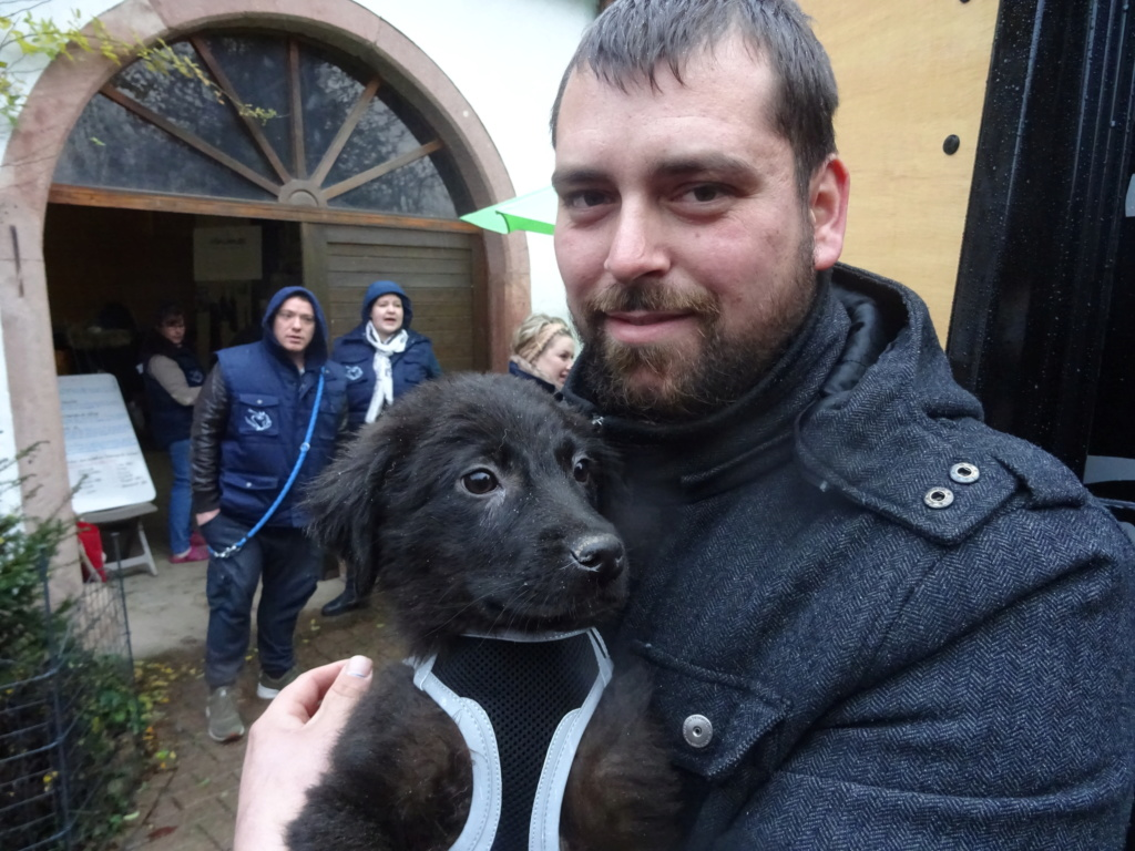 Pixis - mâle - chez Andreea à Târgu Frumos-reservé adoption 68 Dsc00244