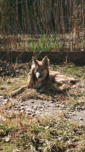 Ohmnia (ex-Zoey) - femelle - refuge d'Arad - réservée adoption (68) Dsc_0412